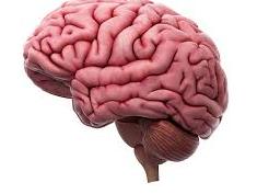 Arash Hadipour Nikash: How Coronavirus Can Affect The Brain